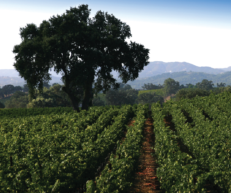 Experience the Flavors of Paso Robles