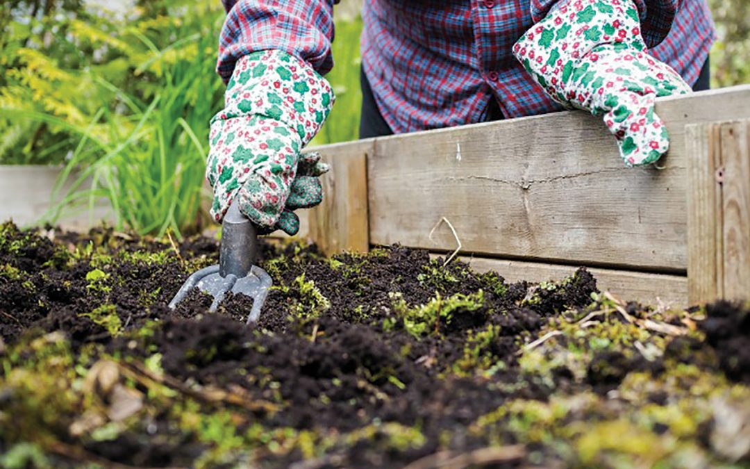 Fall In Love With These Gardening Ideas